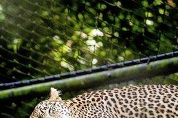 Zoo,nostalgie du sauvage