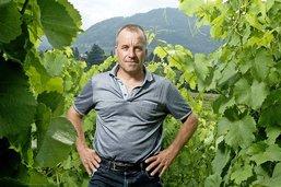 La viticulture espère se relever