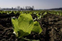 Union autour des légumes bio
