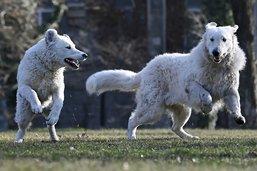 Retour des cours pour les propriétaires de chiens à Fribourg