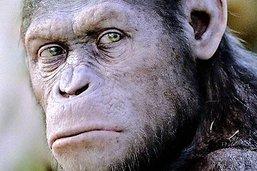 Ces vieux singes qui nous apprennent à faire un remake