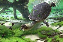 Des scientifiques de Fribourg découvrent un fossile de tortue unique