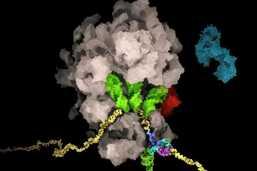 Des chercheurs de l'EPFZ découvrent le talon d'Achille du virus