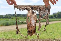 Enterrer des slips pour déterminer la qualité du sol