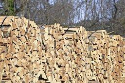 Le bois de nos forêts pas assez utilisé
