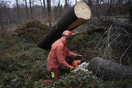 Potentiel forestier pas assez exploité