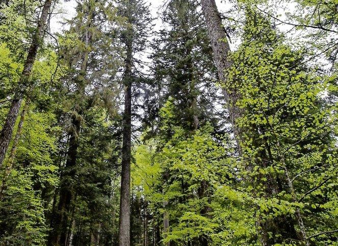 Bouffée d'oxygène pour les forêts