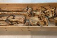Le tombeau de la reine Berthe renfermait un homme