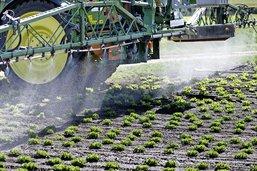 Les pesticides divisent les médecins