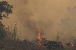 Un incendie dévaste un parc naturel près de São Paulo