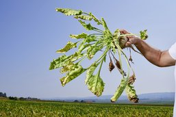 Sursis demandé pour un insecticide